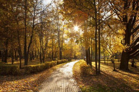 Suplementacja witaminy D wokresie jesienno-zimowym